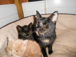 Angel who came to us Christmas Eve with 2 of her kittens