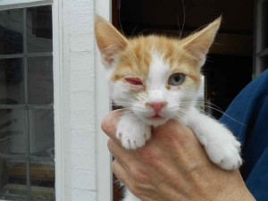 This poor little guy had such a sore eye, thankfully he didn't lose it and is now homed and happy