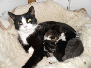 Sheila and her kittens